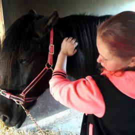 Kun hevonen helpottaa stressiä (LuontoVoima)