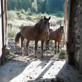 Miten hevonen haluaa asua?